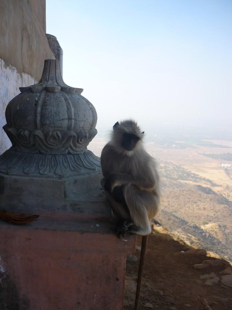 Café y té en Pushkar, India