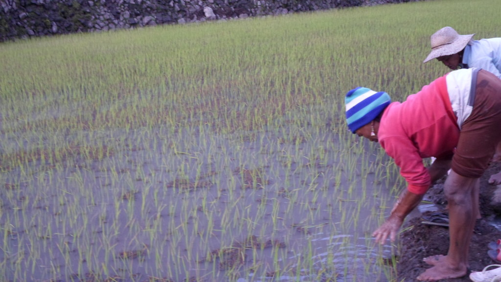 campos de arroz en Filipinas