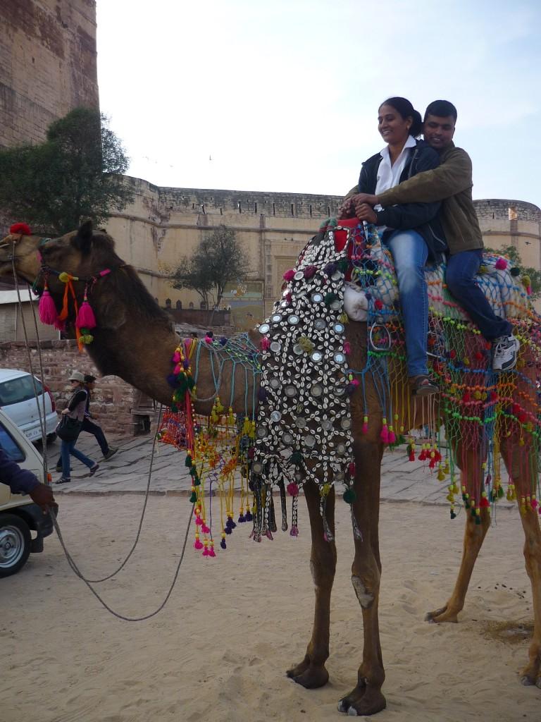Camel Jaipur India