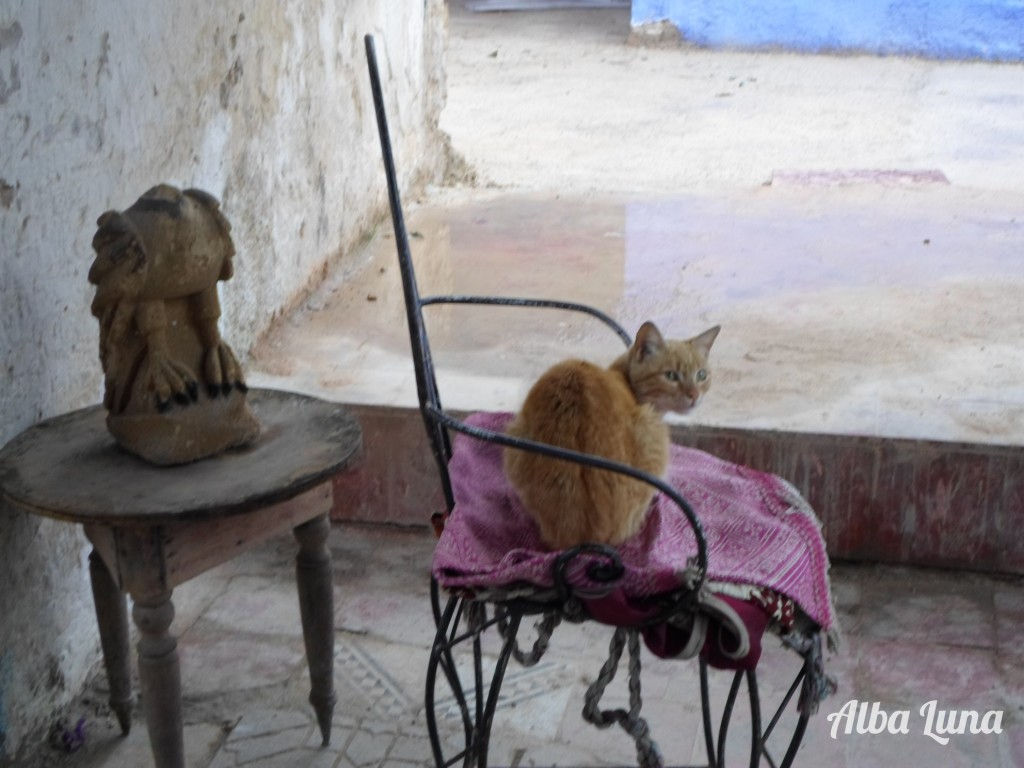 Gatito Fes