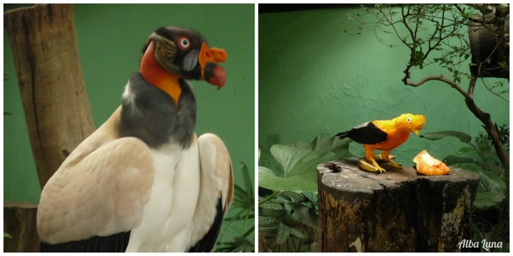 Pájaros Venezuela - Caracas