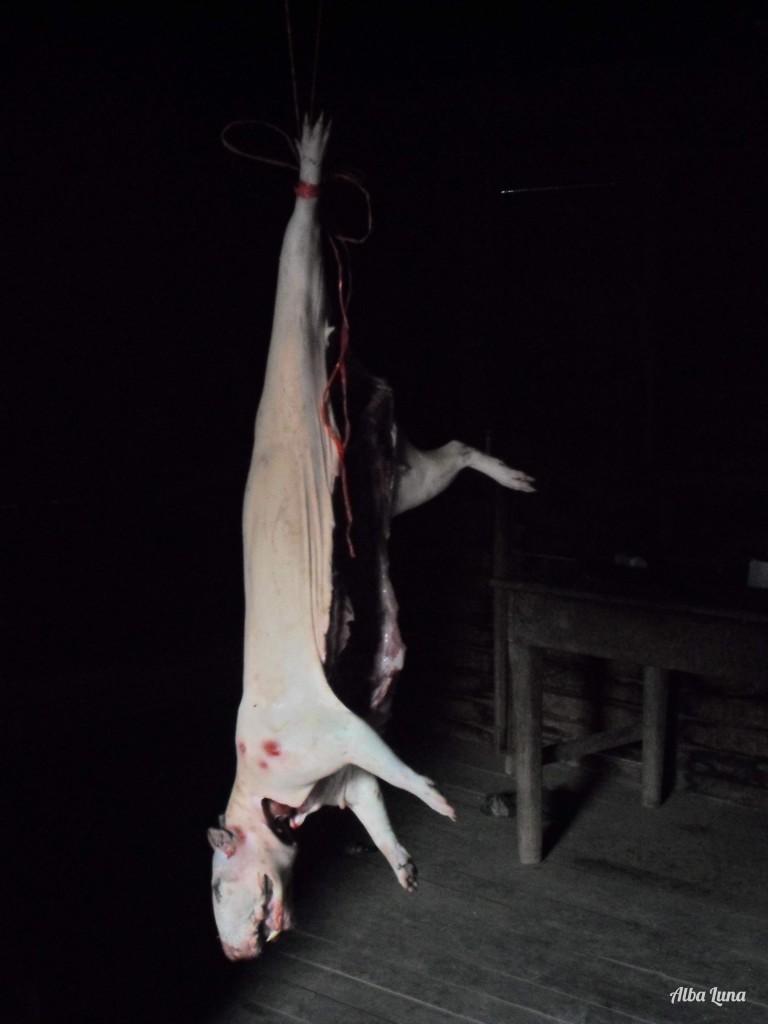 el zamaño es un roedor que se come en Perú