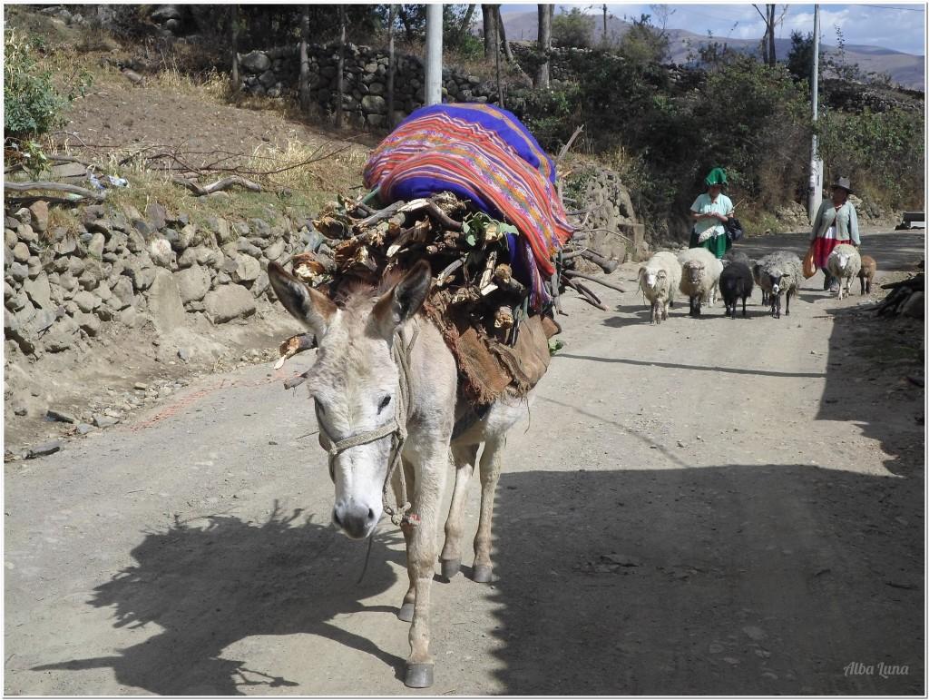 burro Huaras